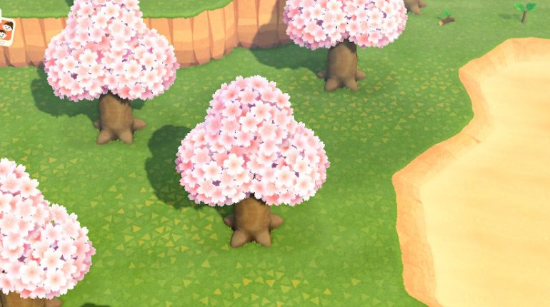 Animal Crossing: New Horizons Cherry Blossom